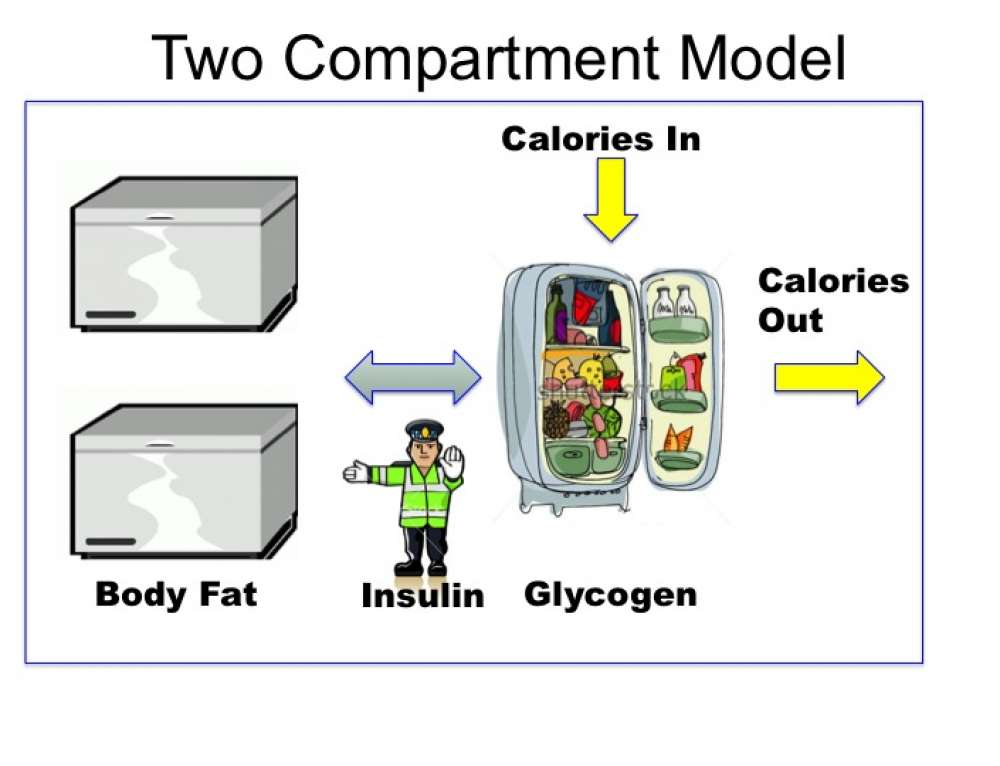Obesity – Solving the Two-Compartment Problem – Fasting 21