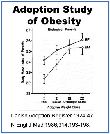 Correlation Between Fast Food And Obesity