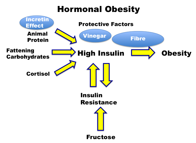 Dietary Fat and Hyperinsulinemia - Intensive Dietary