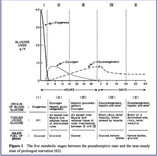 Fasting Physiology Part Ii