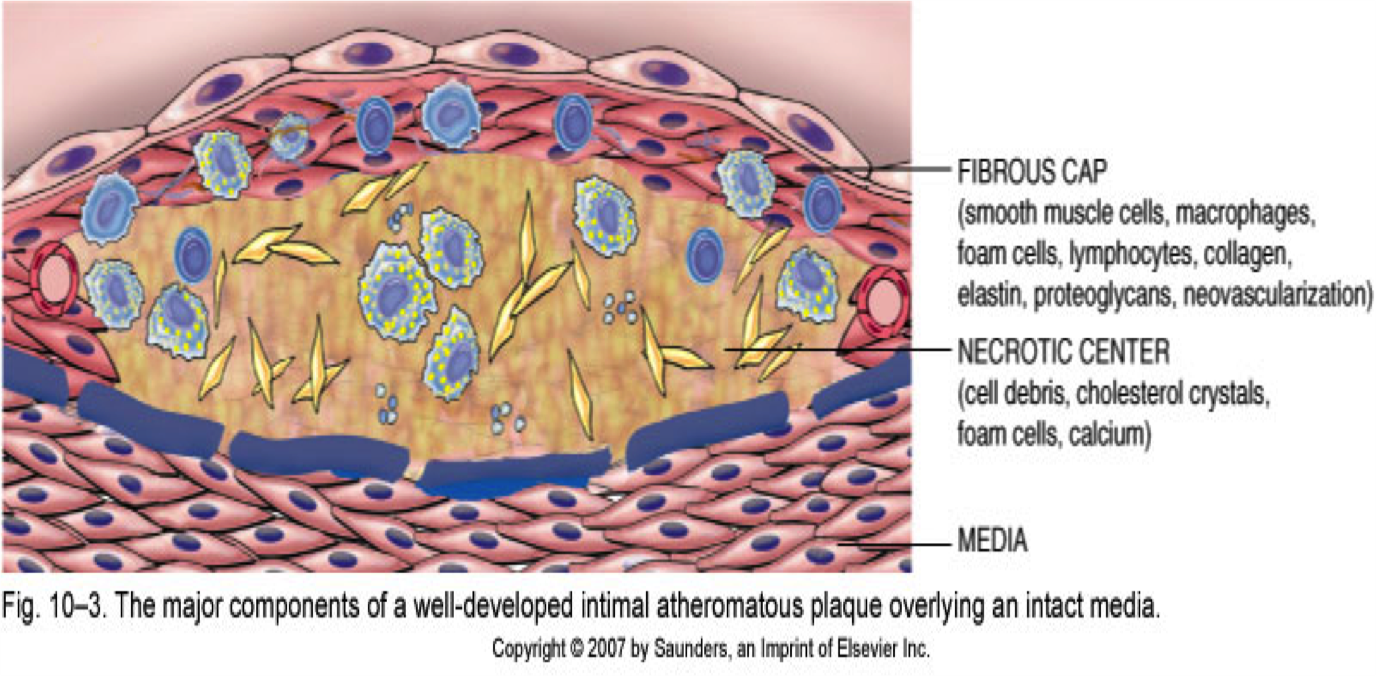 Fasting and Autophagy - mTOR/ Autophagy 1 - Intensive Dietary